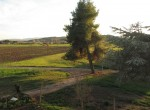 magliano toscane verbouwproject te koop 6