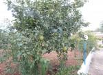 Ostuni Puglia te renoveren trulli te koop 17