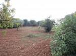 Ostuni Puglia te renoveren trulli te koop 18