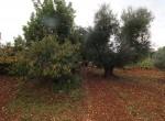 Ostuni Puglia te renoveren trulli te koop 25