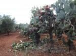 Ostuni Puglia te renoveren trulli te koop 26