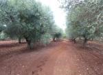 Ostuni Puglia te renoveren trulli te koop 29