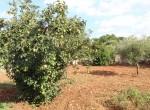 Ostuni Puglia te renoveren trulli te koop 33