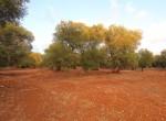 carovigno puglia bouwgrond olijfgaard te koop 11