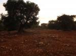 carovigno puglia bouwgrond olijfgaard te koop 12