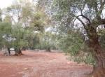 carovigno puglia bouwgrond olijfgaard te koop 14
