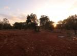 carovigno puglia bouwgrond olijfgaard te koop 6