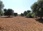 huisje te koop in Carovigno Puglia Italie 15