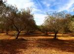 Terrein met te renoveren trulli te koop in Ostuni, Puglia 22