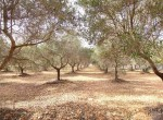 Terrein met te renoveren trulli te koop in Ostuni, Puglia 28