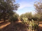 Terrein met te renoveren trulli te koop in Ostuni, Puglia 29