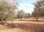 Terrein met te renoveren trulli te koop in Ostuni, Puglia 30