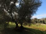 Mooi trullo complex tussen Ceglie Messapica en Martina Franca te koop 17