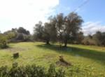 Mooi trullo complex tussen Ceglie Messapica en Martina Franca te koop 8