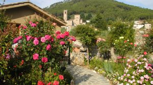2009-roses-and-garden-013