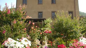 2009-roses-and-garden-015
