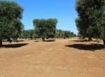 bouwgrond te koop in Puglia San Vito dei Normanni Carovigno 1