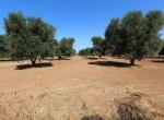 bouwgrond te koop in Puglia San Vito dei Normanni Carovigno 2