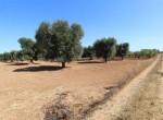 bouwgrond te koop in Puglia San Vito dei Normanni Carovigno 3