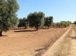 bouwgrond te koop in Puglia San Vito dei Normanni Carovigno 4