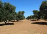 bouwgrond te koop in Puglia San Vito dei Normanni Carovigno 5