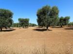 bouwgrond te koop in Puglia San Vito dei Normanni Carovigno 6