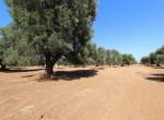 bouwgrond te koop in Puglia San Vito dei Normanni Carovigno 7