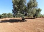 bouwgrond te koop in Puglia San Vito dei Normanni Carovigno 8