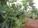 Ostuni Puglia te renoveren trulli te koop 13