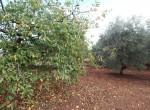 Ostuni Puglia te renoveren trulli te koop 27