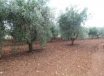Ostuni Puglia te renoveren trulli te koop 28