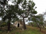 carovigno puglia bouwgrond met trullo te koop 1