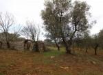 carovigno puglia bouwgrond met trullo te koop 10