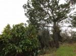 carovigno puglia bouwgrond met trullo te koop 12