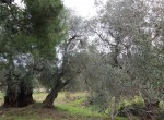 carovigno puglia bouwgrond met trullo te koop 4