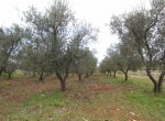 carovigno puglia bouwgrond met trullo te koop 5
