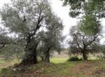 carovigno puglia bouwgrond met trullo te koop 7