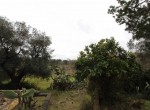 carovigno puglia bouwgrond met trullo te koop 9
