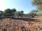 carovigno puglia bouwgrond met zeezicht te koop 21