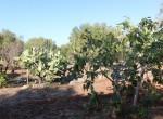 carovigno puglia bouwgrond met zeezicht te koop 5