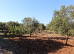 carovigno puglia bouwgrond met zeezicht te koop 7
