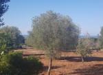 carovigno puglia bouwgrond met zeezicht te koop 9