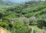 villa met olijfgaard in Perdifumo Campania te koop 8