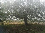Te renoveren villa te koop in Brindisi, Puglia 7
