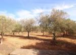 Terrein met te renoveren trulli te koop in Ostuni, Puglia 19
