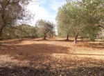 Terrein met te renoveren trulli te koop in Ostuni, Puglia 20