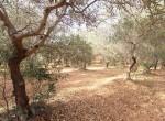 Terrein met te renoveren trulli te koop in Ostuni, Puglia 27