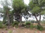 Villa met zeezicht en zwembad te koop in Italie Puglia Carovigno 33