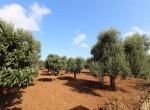 Te koop - terrein met trullo in Carovigno, Puglia 10