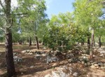Te koop - terrein met trullo in Carovigno, Puglia 18